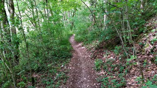 Ein herrlicher Trail...