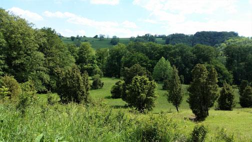 Hinter dem Hügel sind die Wiesensteiger Lifte...