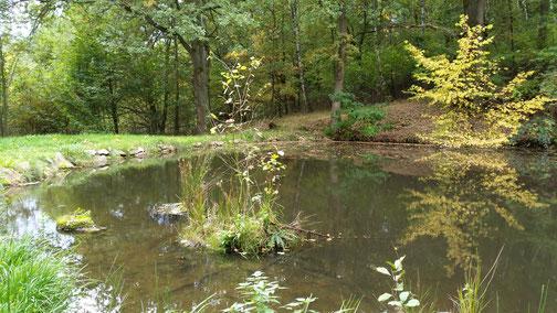 Kleine Teiche gibt es zuhauf in dieser Gegend...