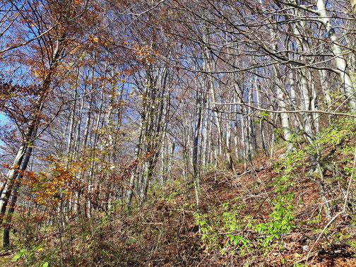 Die Bäume haben weitgehend ihr Blätterkleid verloren...