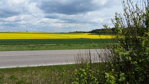 Dunkle Wolken über gelbem Rapsfeld - hoffentlich wird der Raps nicht gegossen...