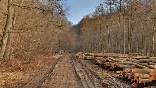 Hier gibt´s Holz fürs Lagerfeuer...