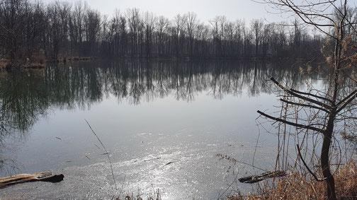 In der Nähe der Donau gibt es viele kleine Seen, schattige...