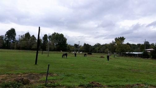 Es gibt jede Menge Pferde... und immer viel Platz...