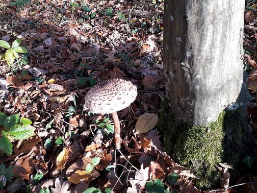 Vermutlich gibt es heute noch Pilzsuppe...