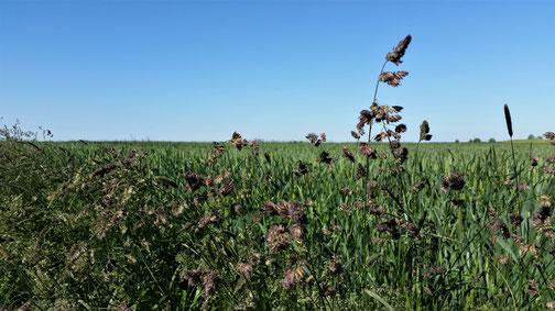 Die Felder bei Tomerdingen...