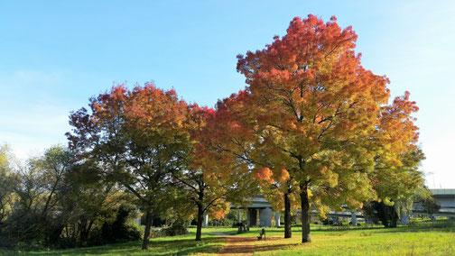Der Herbst überzieht mit seinen Farben die Natur...