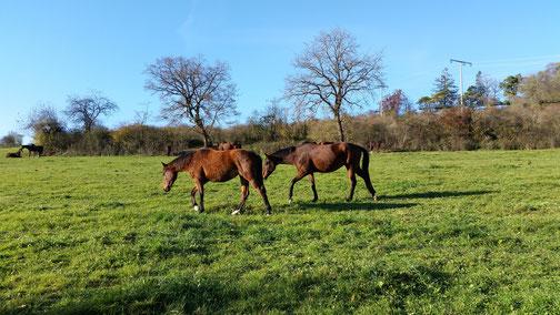 Auch den Pferdchen gefällt das sonnige Wetter...