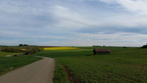 Lange werden die Maisfelder nicht mehr in der Sonne glänzen...