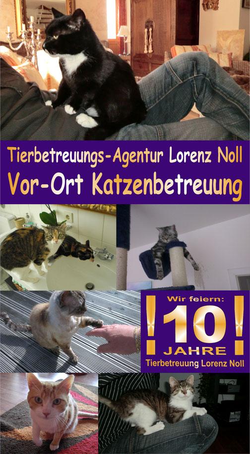 Katzenbetreuung, Tierbetreuung, vor-Ort Katzen betreuen, Katzensitter