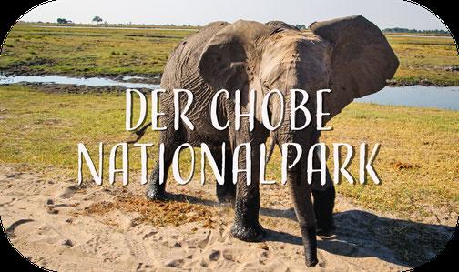 Elefant, Chobe, Botswana, Botswana, Kasane, Afrika