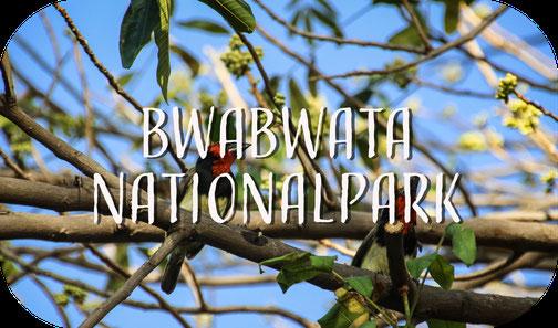 Vogel, Bwabwata Nationalpark, Namibia, birds