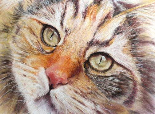 Augenblick,Pastellkreide  50x70, 2015  ,verkauft