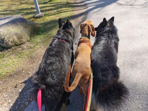 Hundespazierdienst Region Frauenfeld, kleine Gruppen, alle Rassen