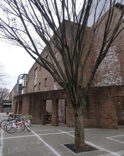 1月17日(2014) ケヤキと煉瓦づくりの小学校(武蔵野市)