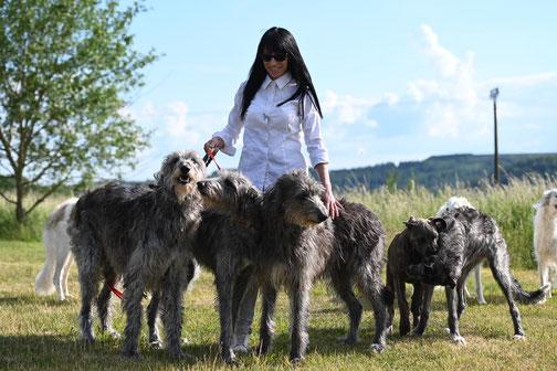 FCI Barsoi und Deerhound Zucht in Deutschland..., Barsois & Deerhounds mit DWZRV Ahnentafeln..., Windhunde mit Charme-unsere Barsois und Scottish Deerhounds!