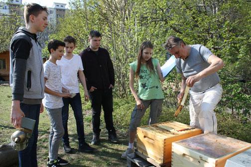 Jetzt werden die Bienenvölker durchgesehen...