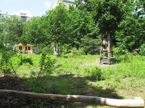 Schon im dem Sommern, als die Hecke gepflanzt wurde, stieg die Zahl der Pflanzenarten auf dem Gelände enorm an.