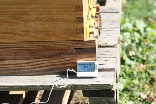 Schon jetzt ist es im Bienenstock zehn grad wärmer als draußen!