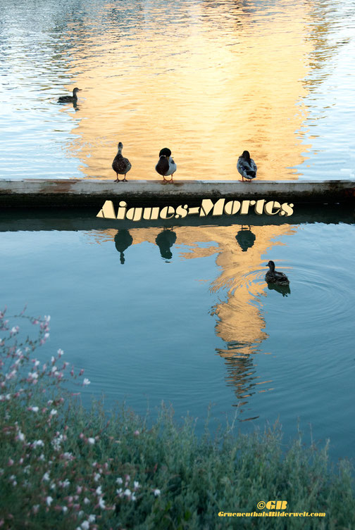 AnsichtskarteAiques-Mortes, Wasserspiegelung,Rhone-Kanal,