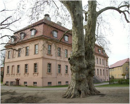Die Zwiesel-Platane, gepflanzt zur Bauzeit des Schlosses. (Photo 2014)