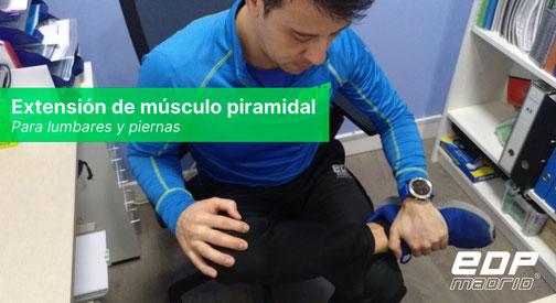 Extensión de músculo piramidal