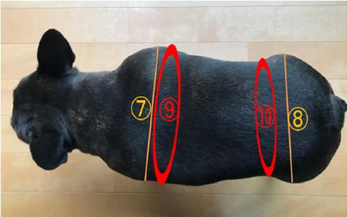 犬用カート採寸の為の写真2