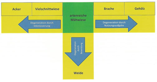 Quelle: Dr. Hans-Christoph Vahle -                                                     http://vegetationskun.de/wiesenprojekt.html