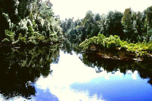 Naturwälder am Gordon River (Tasmanien) [© Foto: Dr. G. Strobel]