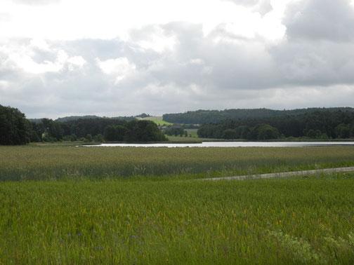 Biotopfläche Steingraben (Foto: C. Beckstein)