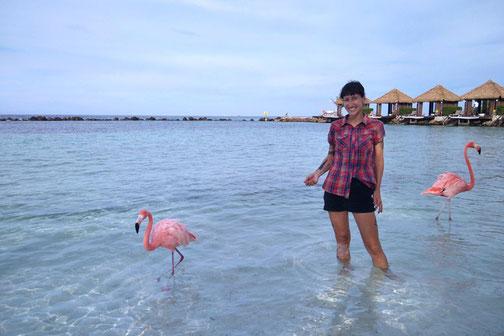 Flamingo Island, Aruba, Caribbean Trip