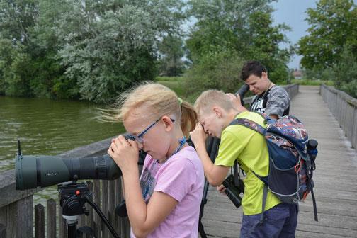 Vogelbeobachtung am Altmühlsee