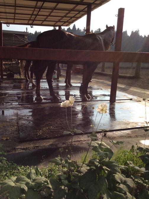淡い日差しに可憐な花と馬・・というところかな。ぼんやり良い日でした。