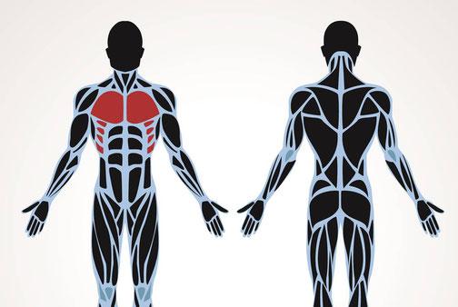 Brust Brustmuskulatur Rüdiger Bülow Training is personal