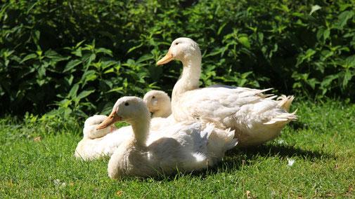 Urlaub am Bauernhof Hochreith, Tiere streicheln