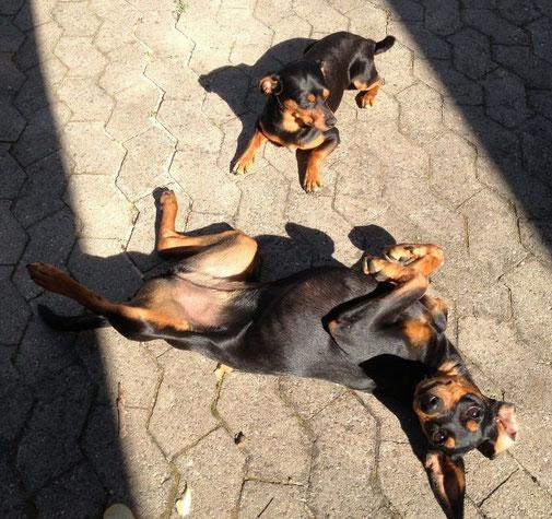 Rufus und Frieda beim Sonnenbaden ;-))