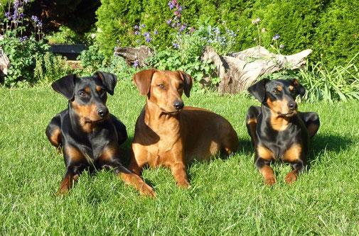 Mai 2011, Geeva, Onnie und Sally geniesen die Sonne !!