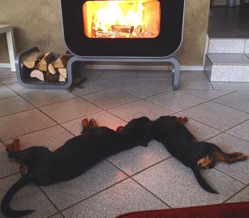 01.11.2013, Frieda und Rufus genießen den Feiertag am Kamin ;-)