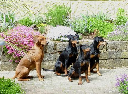 10.05.2013 Onnie, Geeva, Dejsi und Sally in unserem Garten  ;-))
