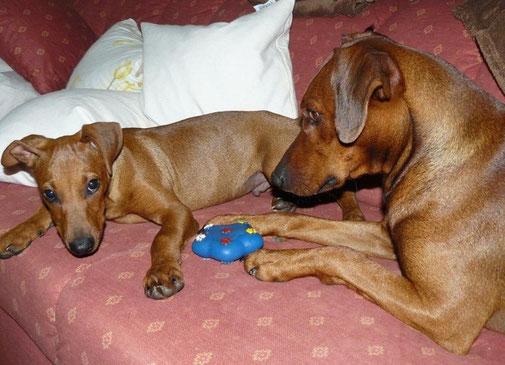 Chester und Bojo, beim gemeinsamen Spielen  ;-))