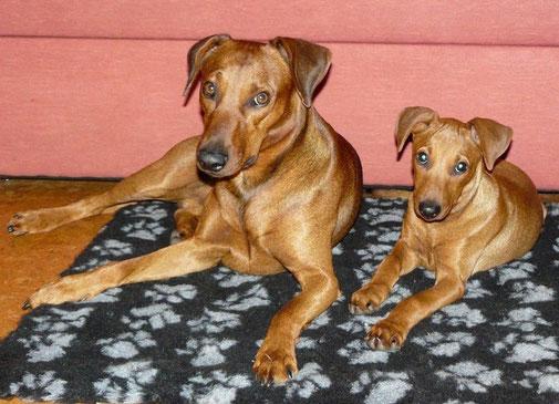 Okt. 2012, Wir haben Hunger !!! Bojo und Chester warten auf ihr leckeres Fleisch ;-))