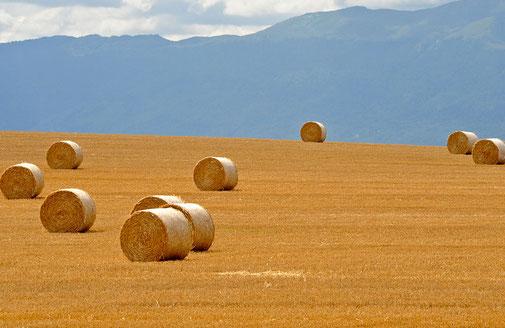 Strohrollen auf dem Feld. © ledom111 - stock.adobe.com