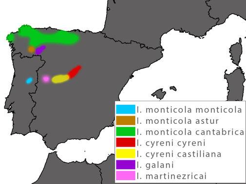 Iberolacerta cyreni