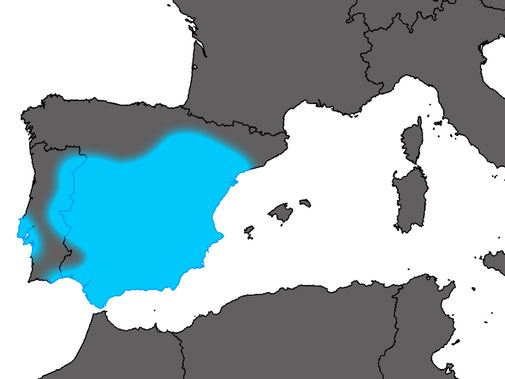 Distribution Acanthodactylus erythrurus