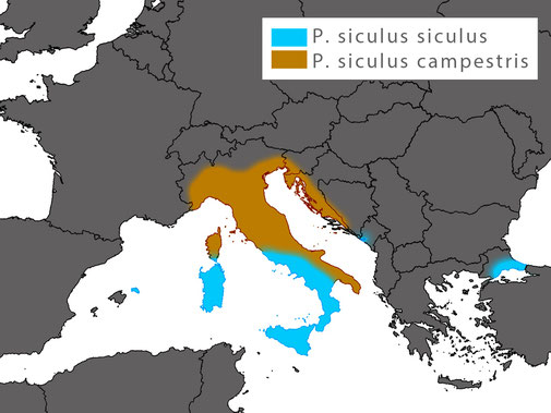 The distribution range of Podarcis siculus - introduced populations exist in Spain, Greece (not mapped) and even in North-America.