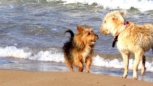 Tipps zur richtigen Hundehaltung - fair4world