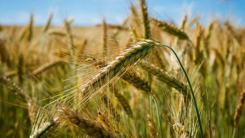 Nährwerttabelle - Vitamin B1 - Getreide - fair4world