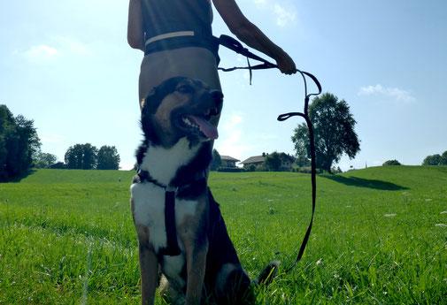 Lauf dich fit mit Hund - Traveldog - fair4world