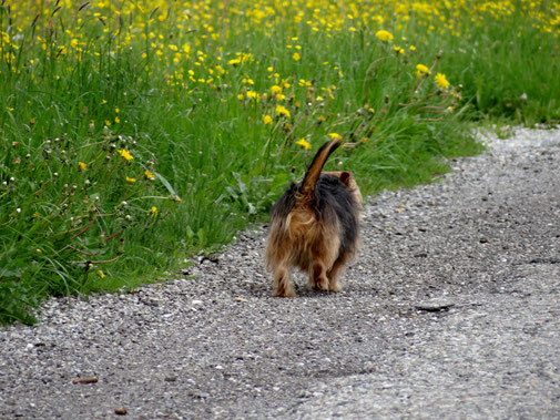 Hundekot auf Wiesen und Weiden - Traveldog -fair4world