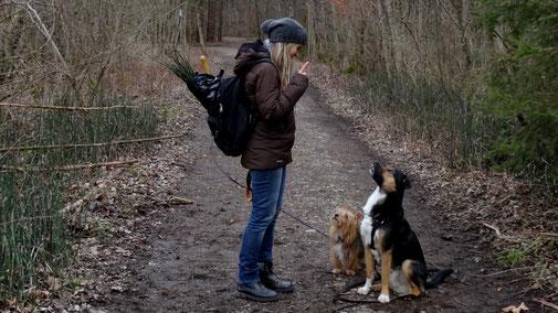 Hundeerziehung bei mehreren Hunden - fair4world